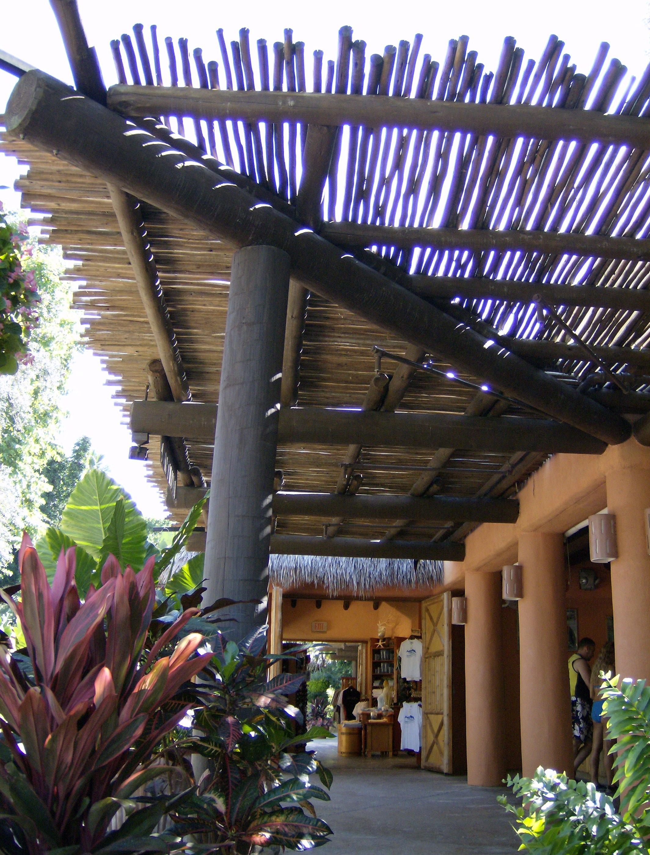 Eucalyptus Poles Eucalyptus Timber Eucalyptus Wood