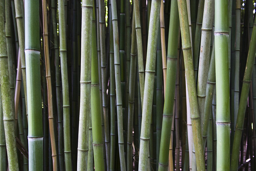 The Many Bamboo Uses Throughout History To Today Amazulu