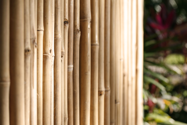 Bamboo Fencing Products