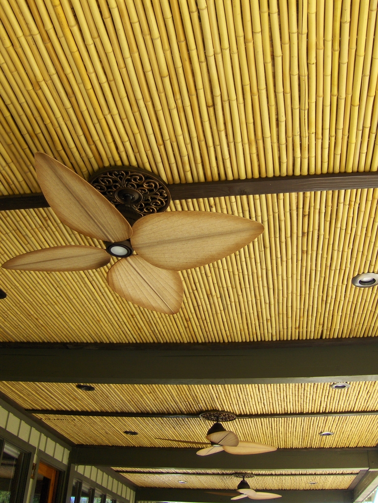 Tonkin Bamboo Fencing From Amazulu Inc Amazulu