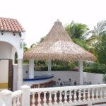 Viro Thatch Palm
