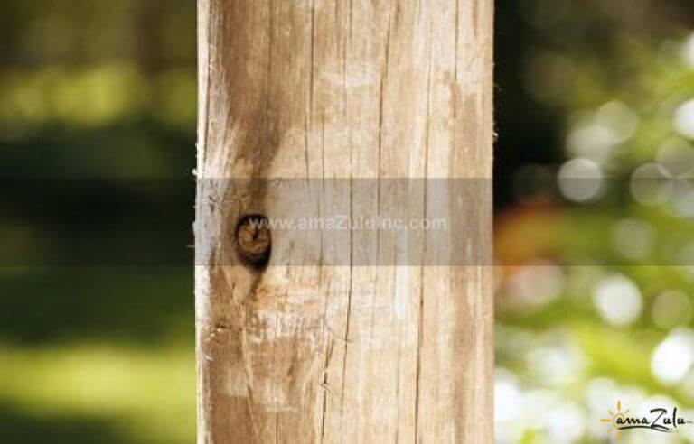 EucalyptusLarge01