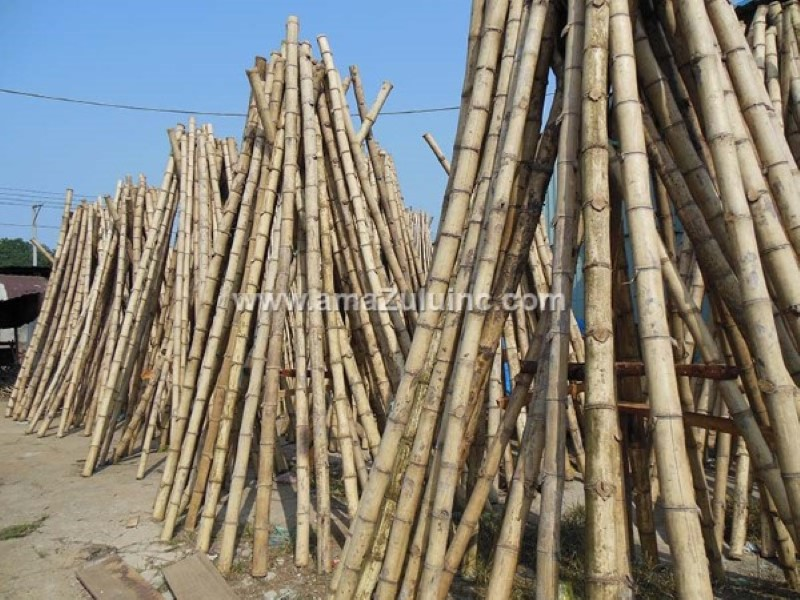 tre-gai bamboo